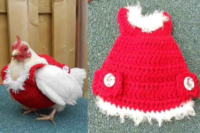 Ayam Pun Nak Bergaya Menjelang Krismas