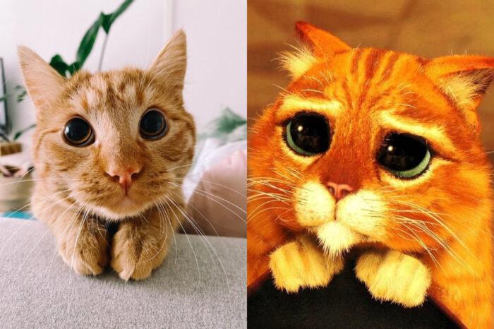 "Aksi Kucing Menyerupai ""Puss in Boots"""