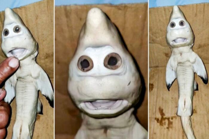 'Baby Shark' Mutan Dengan Wajah Manusia