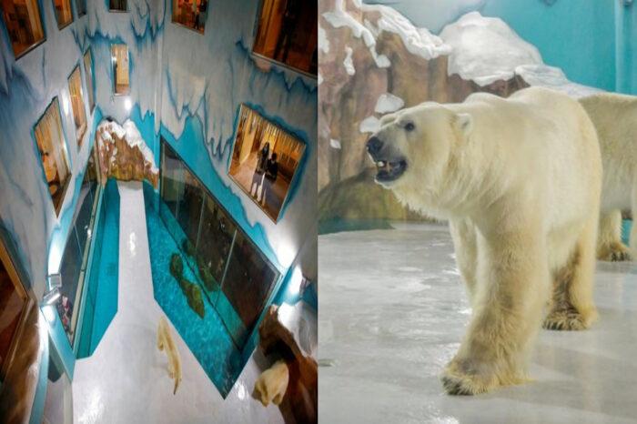 Pencinta Haiwan Marah Beruang Kutub Utara Jadi Tarikan Pengunjung Hotel