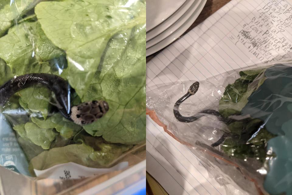 Anak Ular Dalam Bungkusan Salad