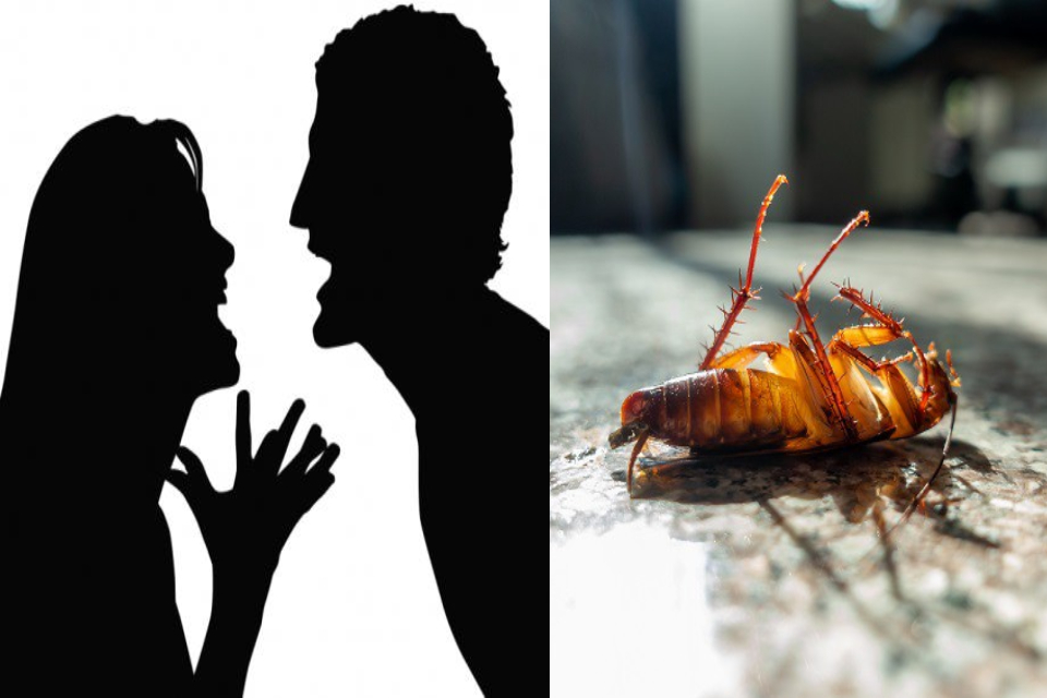 Fobia Melampau Terhadap Lipas, Lelaki Akhiri Perkahwinan Dengan Perceraian