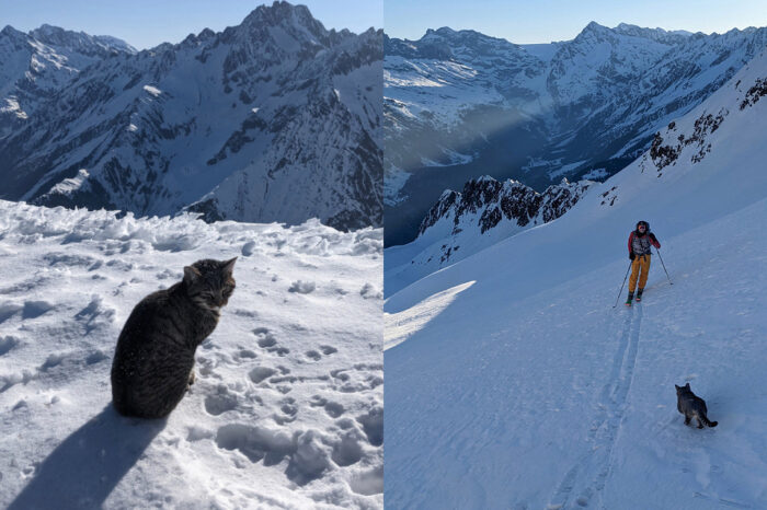Kucing Sesat Ikut Mendaki Ke Puncak Gunung