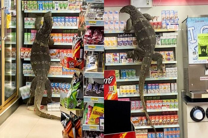 [Viral] Biawak Gergasi 'Shopping' Dalam Pasar Raya